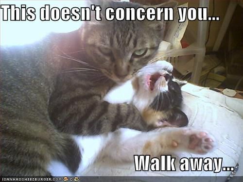 Walk_away_cat